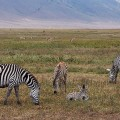 Ascent to KILIMANJARO (5895 m).  MARANGU ROUTE, 5 Days 4 Nights. 2016 – <b>from 1445 EUR€</b>
