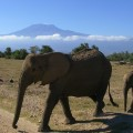 Ascent to KILIMANJARO (5895 m). MACHAME ROUTE, 6 Days 5 Nights. 2016 – <b>from 1450 EUR€</b>